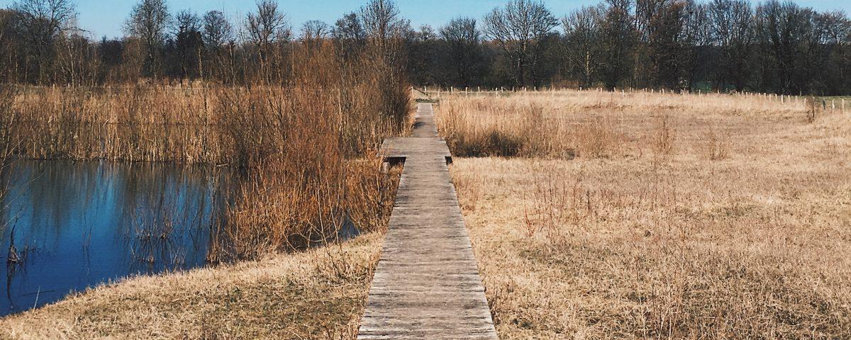 Ein Weg ensteht, wenn man ihn geht. Weg aus Holz zwischen Dünen, Gras und Wasser.
