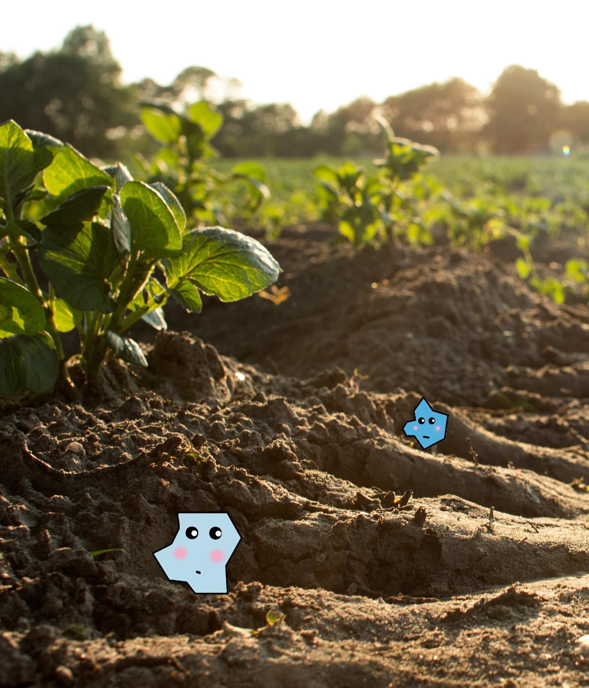 Maxi und Charlie - Mikroplastikpartikel im Boden - microplastics in our soil