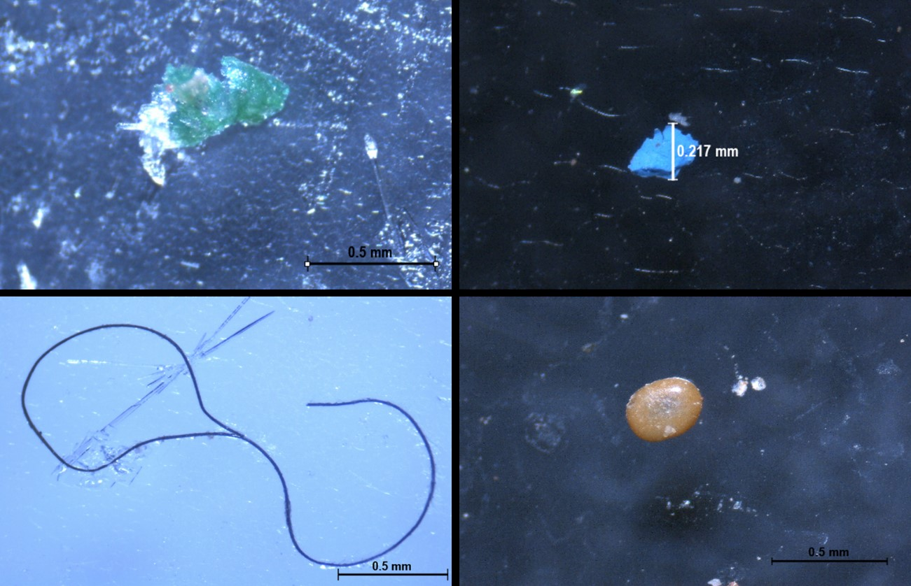 Typisches Erscheinungsbild verschiedener Polymere, die in wässrigen Umgebungen (Meerwasser, Gewässer) gefunden wurden