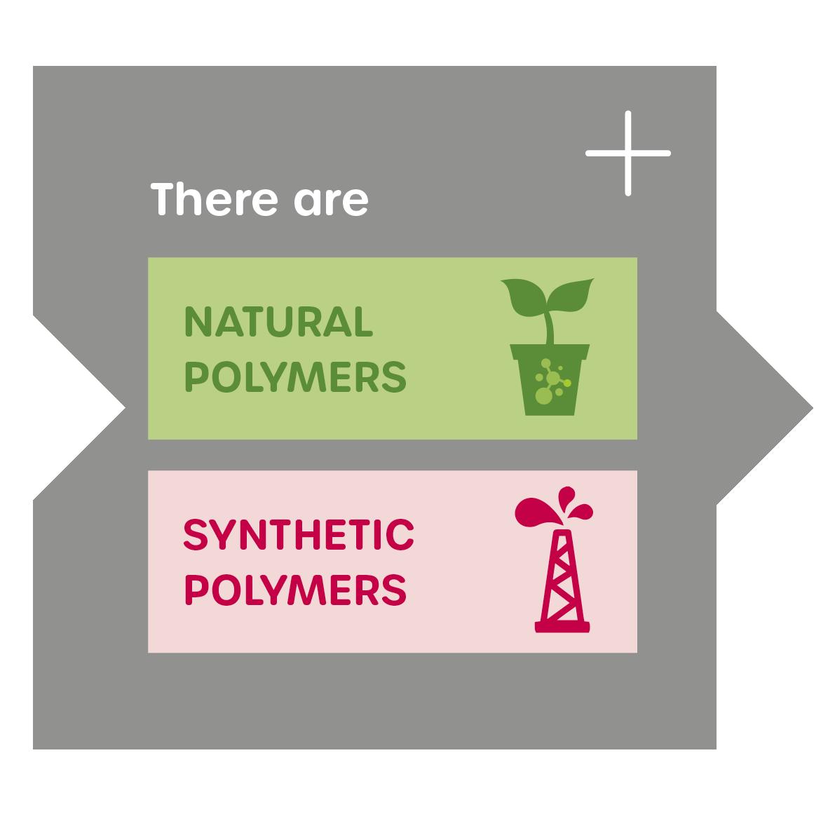 W30-Grafik-Polymere-einzeln-EN-4