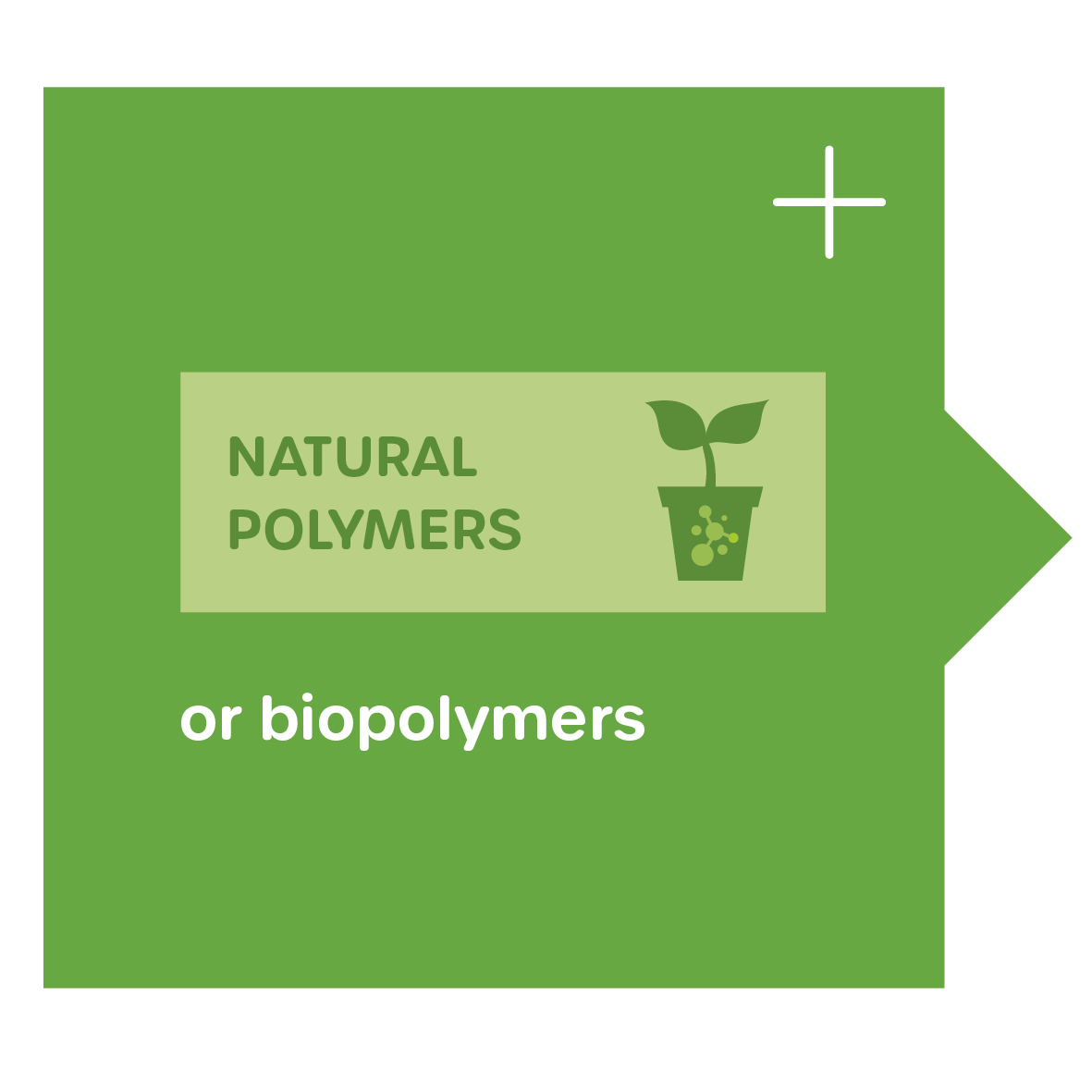 Biopolymers - natural polymers