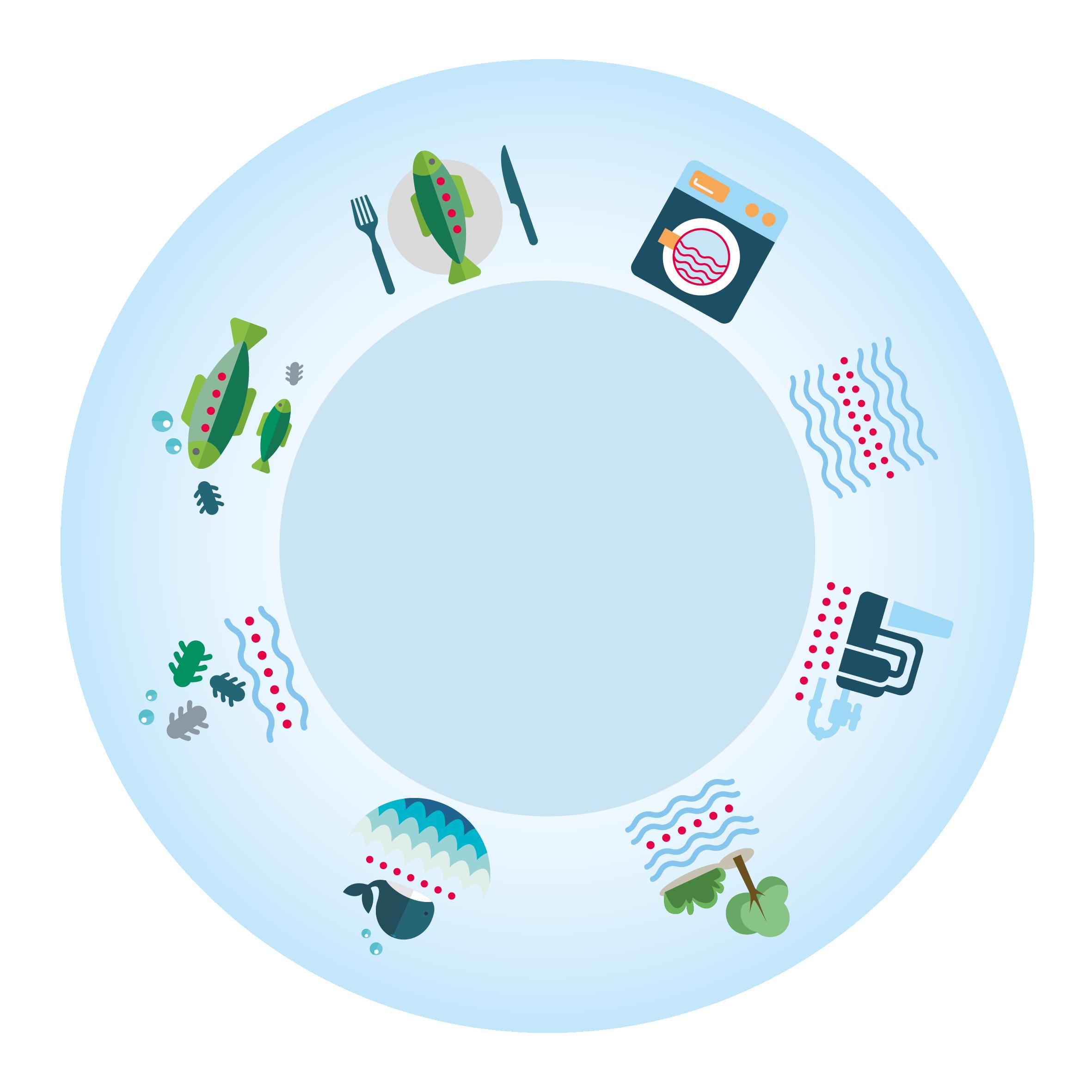 Mikroplastik-Kreislauf: Aus der Waschmaschine auf den Teller