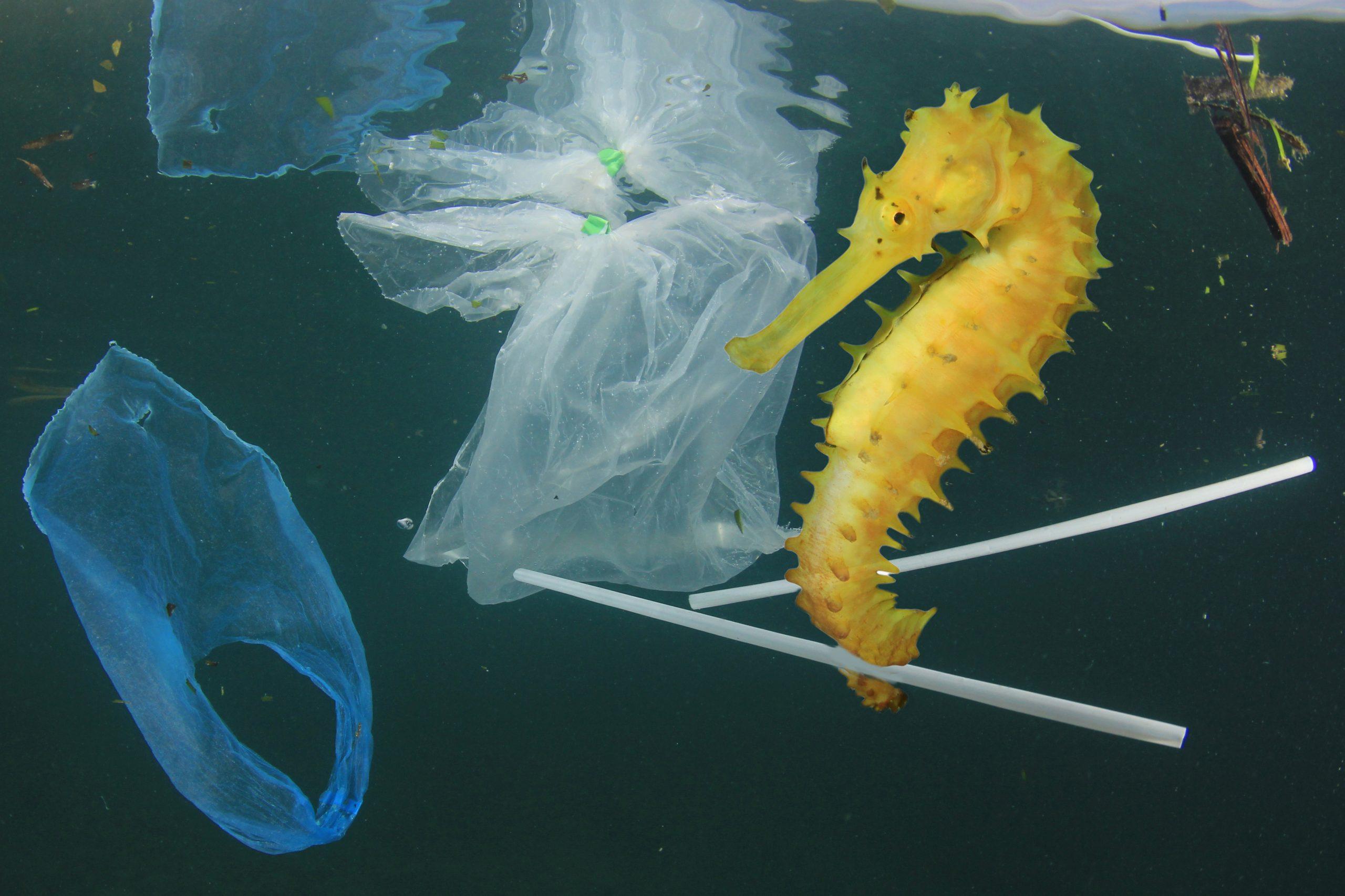 Seepferdchen im Wasser, das einen Plastikhalm umklammert und umgeben ist von Plastikfolien und anderem Müll